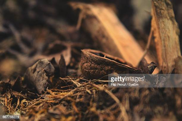 close-up of walnut shell in forest - nutshell stock photos and pictures