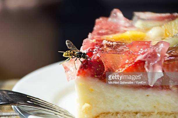 Close-Up Of Wasp On Food Served On Plate