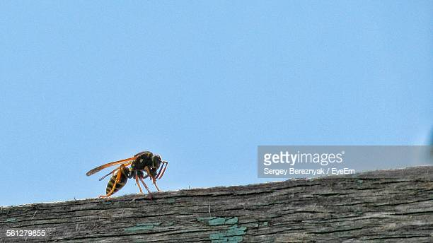 Close-Up Of Wasp On Weathered Wood
