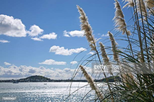 close-up of water against sky - waitemata harbor stock photos and pictures
