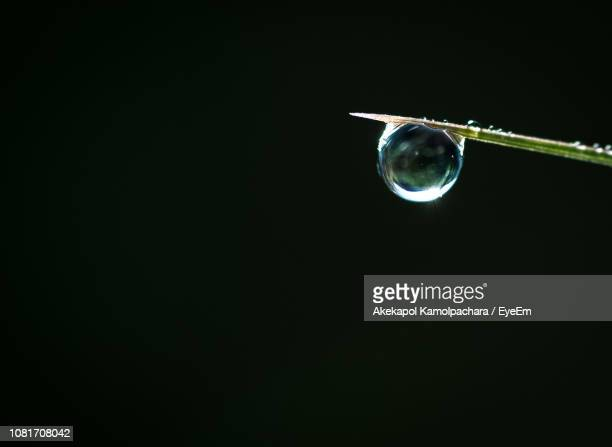 Close-Up Of Water Drop On Grass Over Black Background