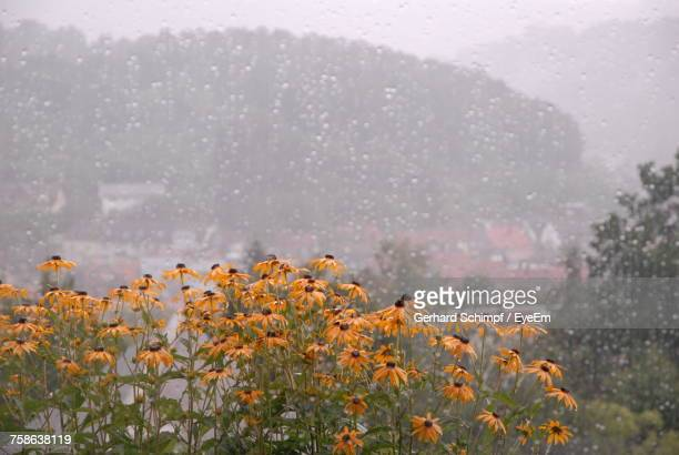 close-up of water drops on flowers against sky - gerhard schimpf stock photos and pictures