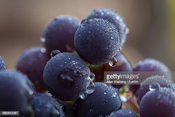 Close-Up Of Water Drops On Grapes