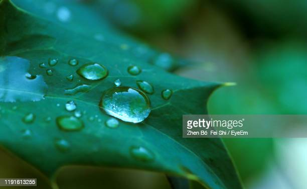 close-up of water drops on leaf - 清らか ストックフォトと画像
