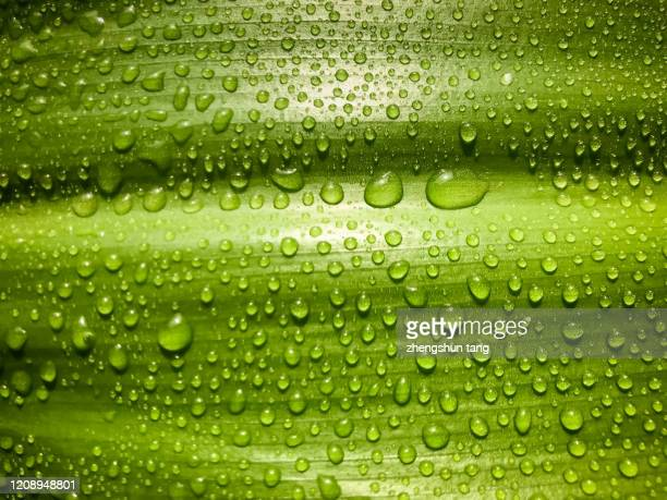 close-up of water drops on leaf - dew stock pictures, royalty-free photos & images