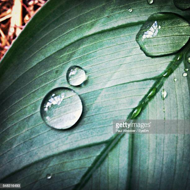 close-up of water drops on leaf - the webster stock pictures, royalty-free photos & images