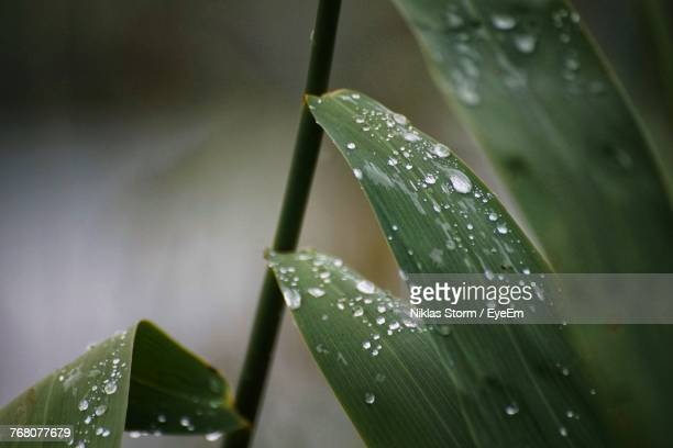 close-up of water drops on leaf - niklas storm eyeem stock photos and pictures
