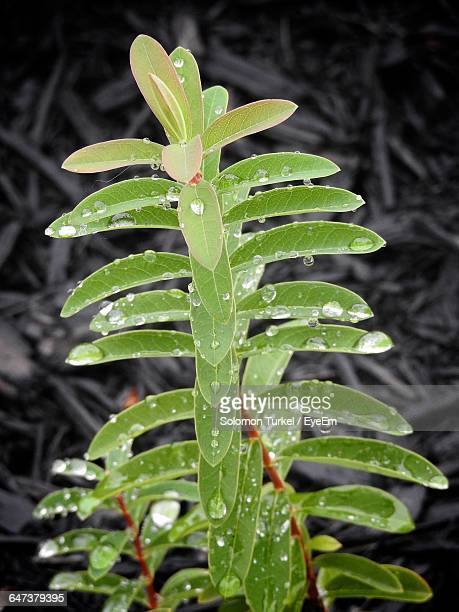 close-up of water drops on leaves - solomon turkel stock pictures, royalty-free photos & images