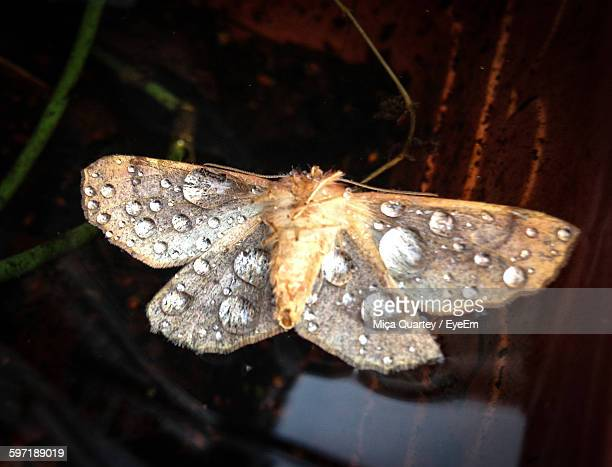 Close-Up Of Water Drops On Moth
