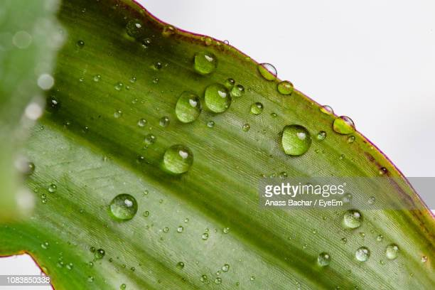 Close-Up Of Water Drops On Plant Leaves