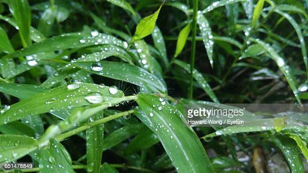 close-up of water drops on plants - howard,_wisconsin stock pictures, royalty-free photos & images