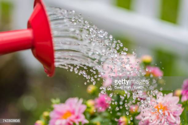 Close-Up Of Water Drops On Red Flowers