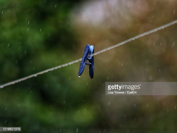 close-up of water drops on rope and peg - esher stock pictures, royalty-free photos & images