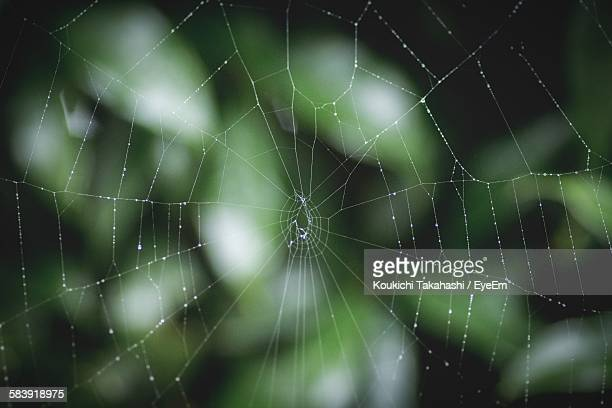 Close-Up Of Water Drops On Spider Web