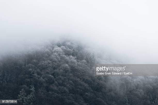 close-up of water during winter - treetop stock photos and pictures
