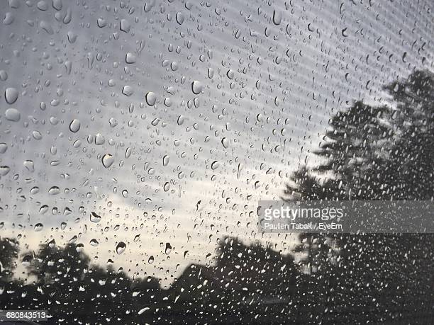 close-up of waterdrops on window against trees - paulien tabak stock pictures, royalty-free photos & images