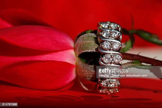 closeup of wedding ring on a rose - nanette j stevenson stock photos and pictures