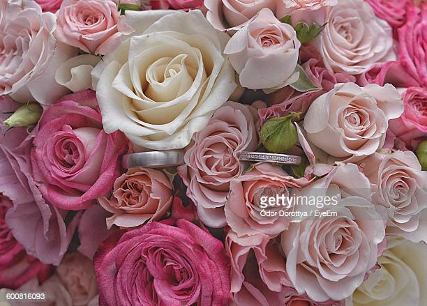 close-up of wedding rings amidst pink roses - wedding background stock pictures, royalty-free photos & images