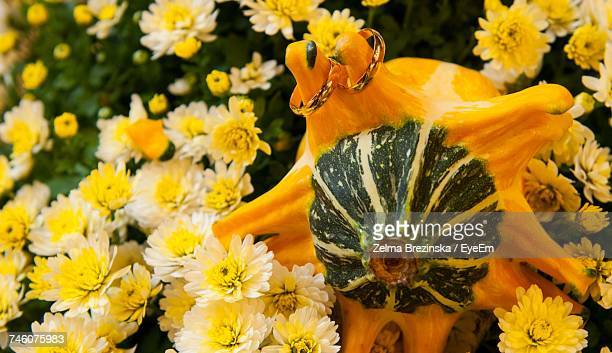 Close-Up Of Wedding Rings On Pumpkin Amidst Yellow Flowers