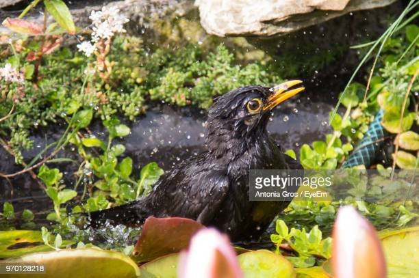 Close-Up Of Wet Bird Perching On Leaf Over Lake