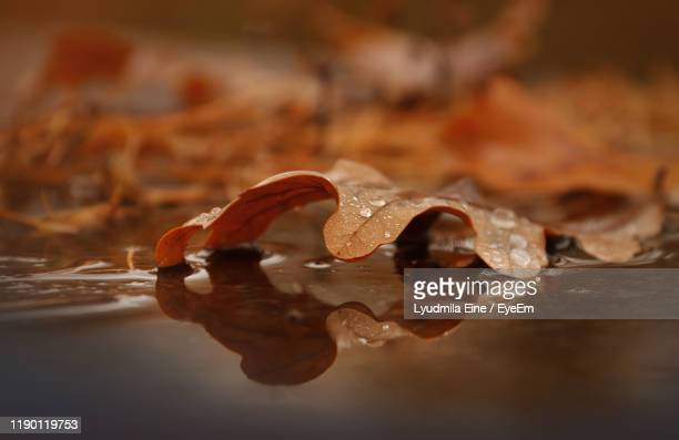 close-up of wet dry leaves during autumn - brown ストックフォトと画像