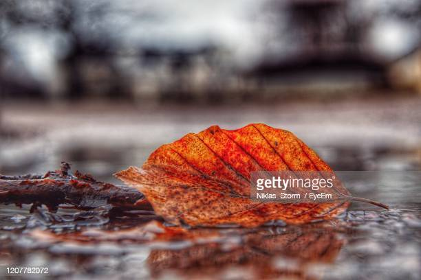 close-up of wet dry leaves during autumn - norrkoping fotografías e imágenes de stock