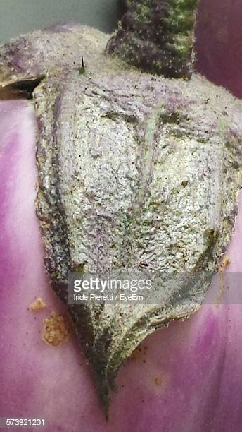 close-up of wet eggplant - massa stock pictures, royalty-free photos & images