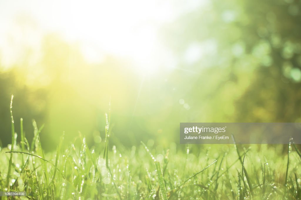 Close-Up Of Wet Grass : Stock-Foto