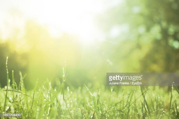 close-up of wet grass - springtime stock pictures, royalty-free photos & images