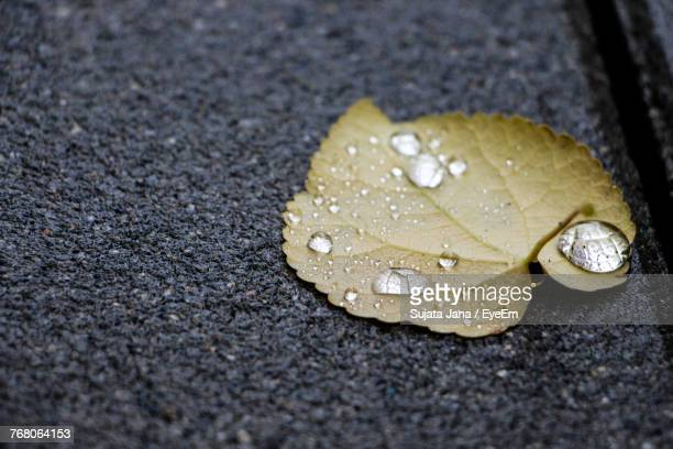 Close-Up Of Wet Leaf On Road