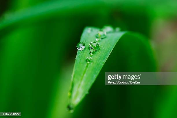 close-up of wet leaf - blade of grass stock pictures, royalty-free photos & images