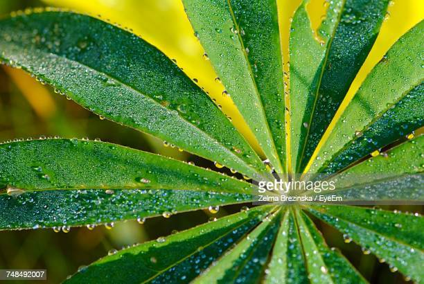 close-up of wet leaves during rainy season - brezinska stock pictures, royalty-free photos & images