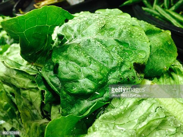 close-up of wet lettuce - lettuce stock pictures, royalty-free photos & images