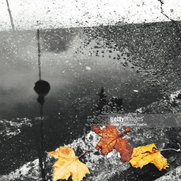 Close-Up Of Wet Maple Leaf In Puddle During Winter