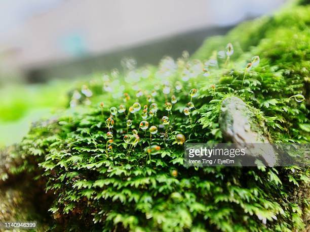 Close-Up Of Wet Plant In Moss