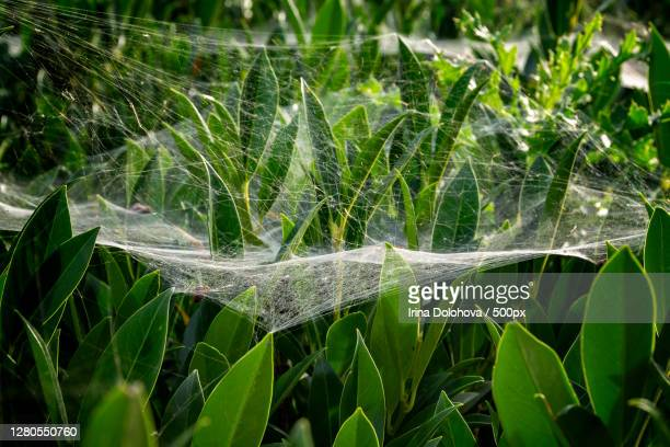 close-up of wet plant leaves,germany - tierbauten stock-fotos und bilder