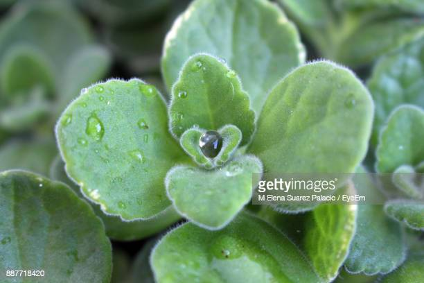 close-up of wet plant - suarez stock pictures, royalty-free photos & images