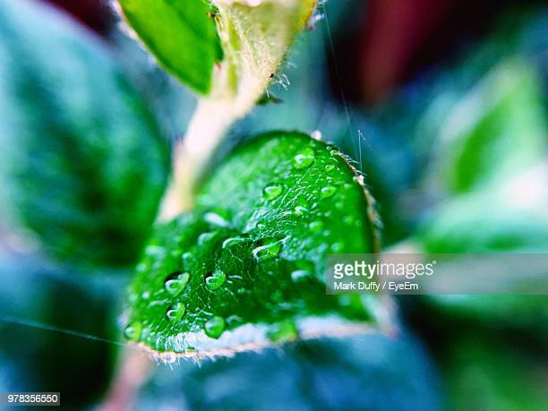 close-up of wet plant - mark duffy stock photos and pictures