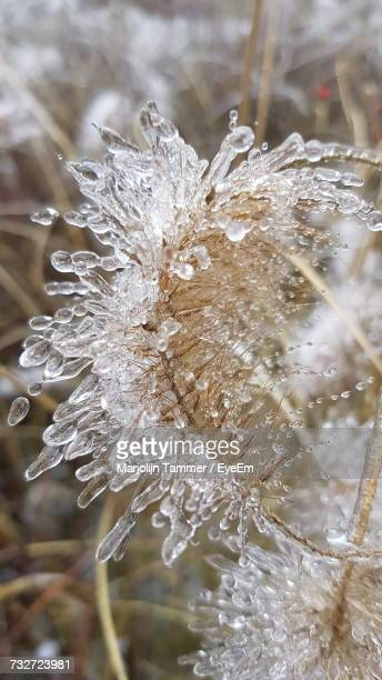 Close-Up Of Wet Plants During Winter