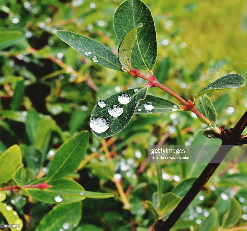 Close-Up Of Wet Plants : Stock Photo