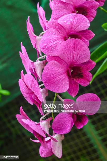 close-up of wet purple flowers blooming outdoors - imagebook stock pictures, royalty-free photos & images