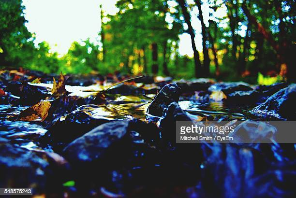 close-up of wet rocks on stream in forest - brook mitchell stock pictures, royalty-free photos & images