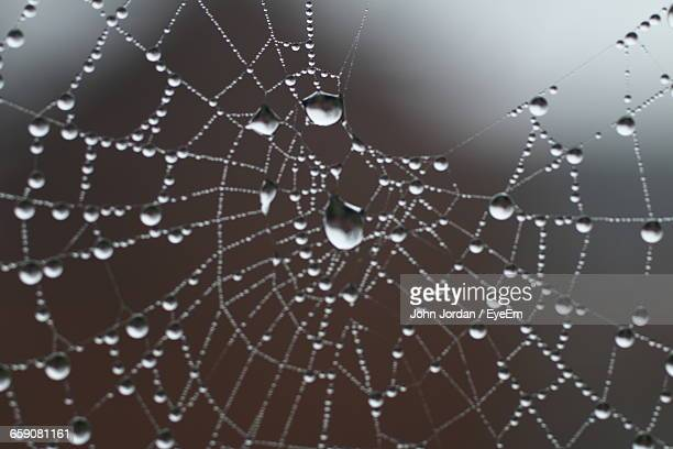 Close-Up Of Wet Spider Web During Monsoon