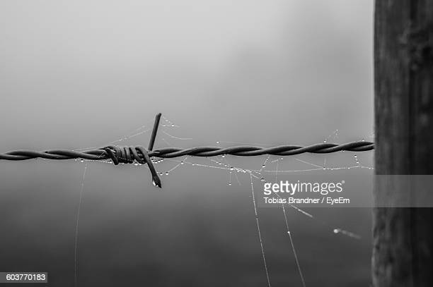 Close-Up Of Wet Spider Web On Barbed Wire