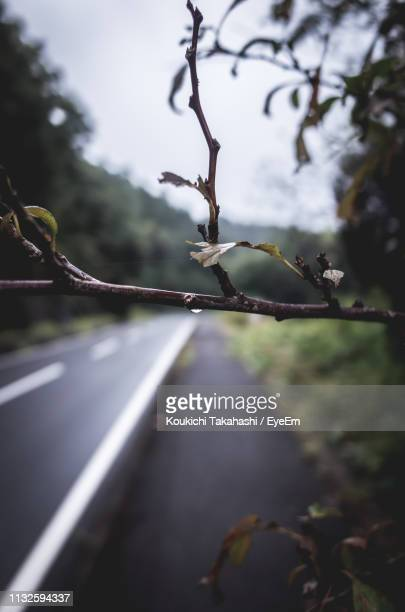 Close-Up Of Wet Tree Branch Over Road