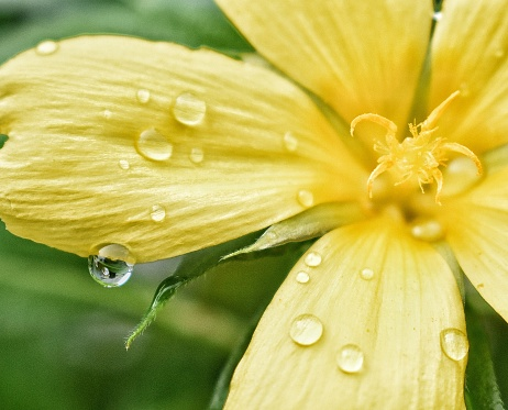 Close-Up Of Wet Yellow Flower - gettyimageskorea