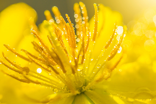 Close-Up Of Wet Yellow Flowering Plant - gettyimageskorea