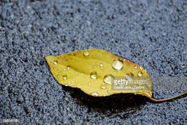 Close-Up Of Wet Yellow Leaf