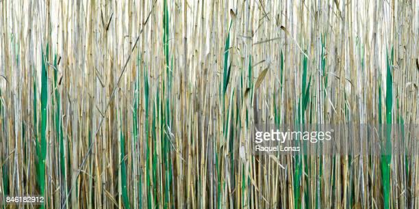 Close-up of wetland grasses