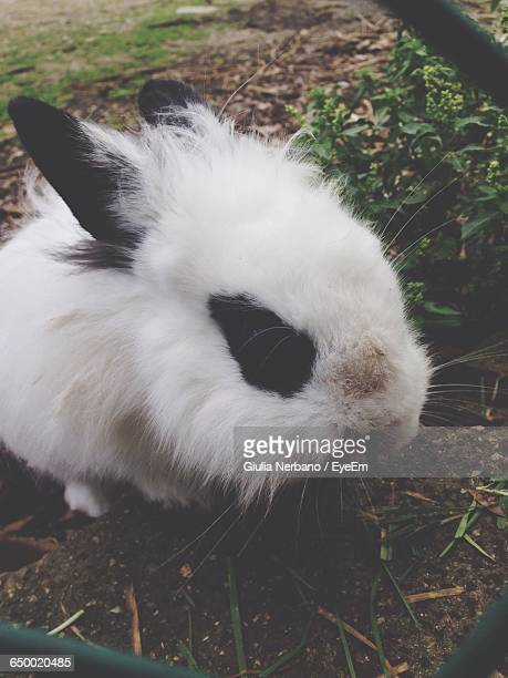 Close-Up Of White And Black Rabbit On Field Seen Through Chainlink Fence